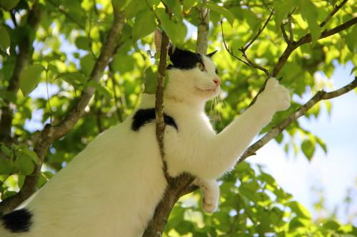木の上のうーちゃん2