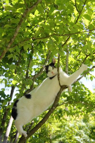 木の上のうーちゃん3