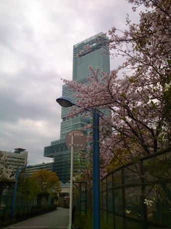 ハルカスと桜!