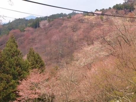 いよっ!千本桜!