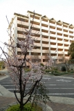 ベルデ名谷・2番館前 早春