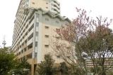 ベルデ名谷・3番館横に咲く桜
