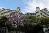 ベルデ名谷・桜越しにみる3・4番館