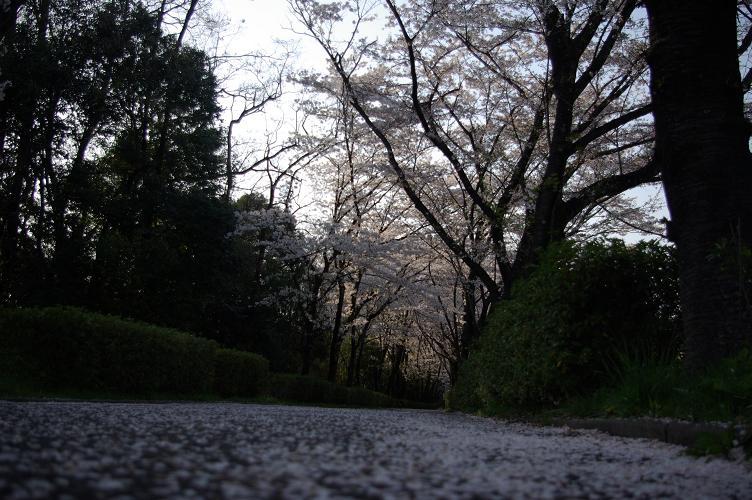 sakura003.jpg