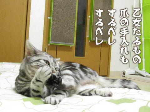 20140419ゆめ01