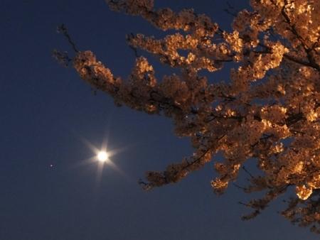 sakura_moon_mars