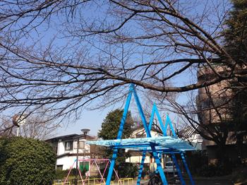 2014・2.25 みどりと花6_R