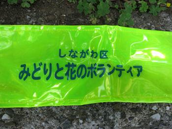 みどりと花2014・5・27・14_R