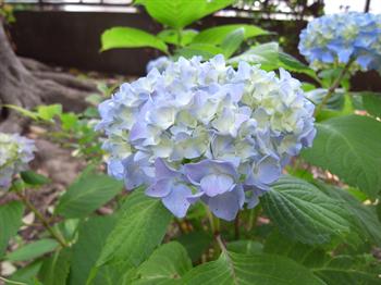 みどりと花2014・5・27・12_R