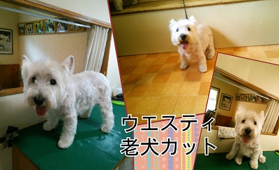 Collage 2014-07-07 21_04_12
