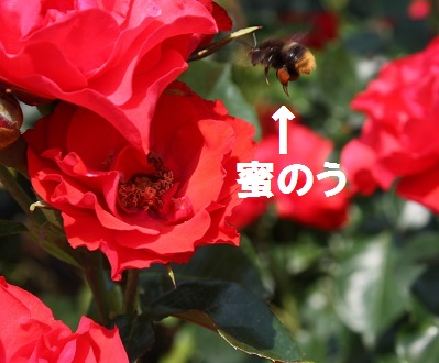 IMG_6016b.jpg
