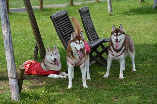 140913 DogDept01