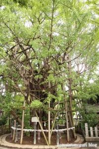 稲毛神社(川崎区宮本町)38