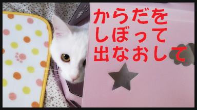 2014-03-21-22-59-05_deco.jpg