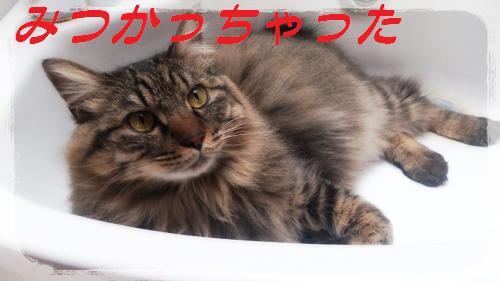 2014-05-11-15-33-04_deco.jpg