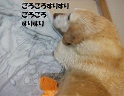 シャンプー日和②