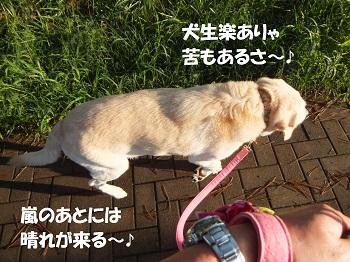 犬生さんぽ