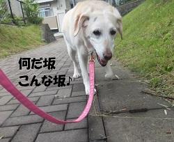 DSCF5464.jpg