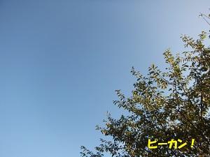 DSCF6055.jpg