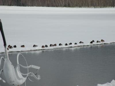 2月20日の屈斜路湖