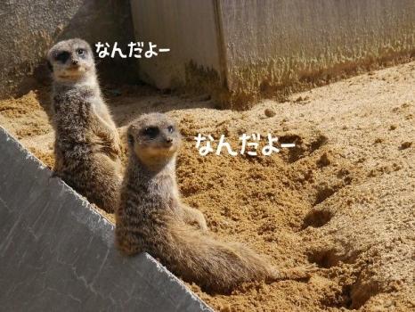 20140322_04.jpg