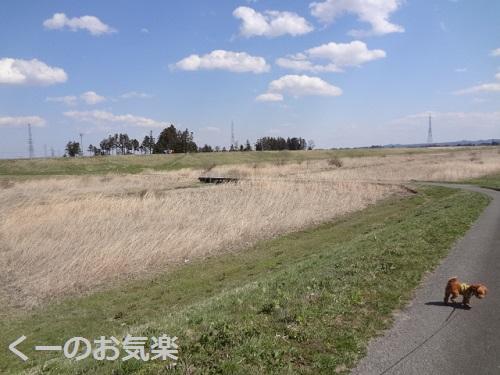 DSC04153.jpg