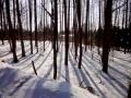大雪-End-8