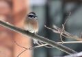 鳥がやってくる