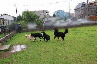 黒子3匹まさし走る