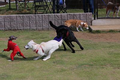 小型犬と走る