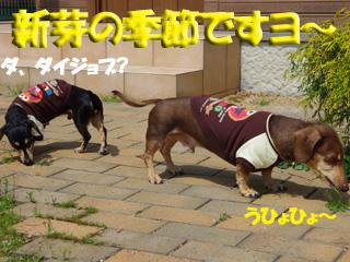2014040703.jpg