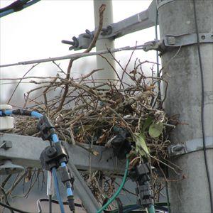 カラスの巣 撤去 001_R