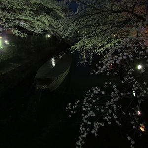 夜桜水門川_R