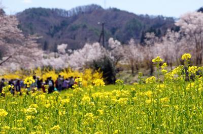 14-4-13花見山4