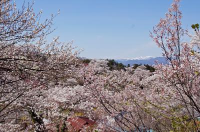 14-4-13花見山9