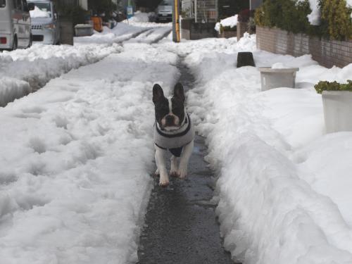 snow201417_convert_20140217164136.jpg