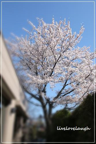 IMG_0750さんぽ1