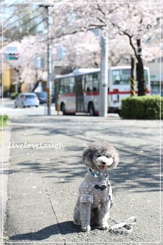 IMG_0793さんぽ6