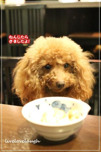 IMG_2931ひな4