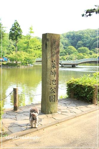 IMG_9989やくし1