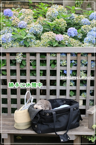 IMG_0264はま6