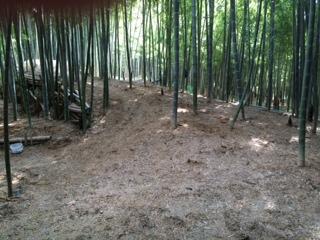 竹藪140502