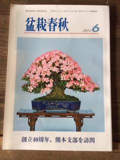 盆栽春秋06