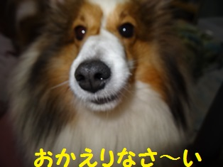 DSC09420.jpg