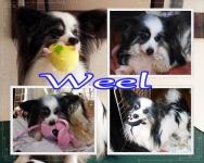 2014imag-weel02x.jpg
