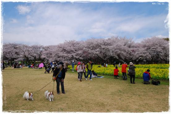 昭和記念公園③