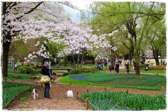 昭和記念公園⑦