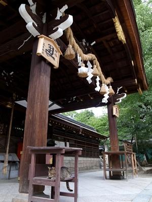 藤森神社の猫1408