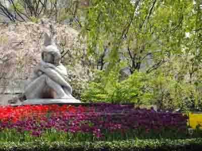 チューリップと桜のコラボ
