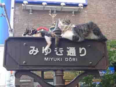 猫が看板の上に